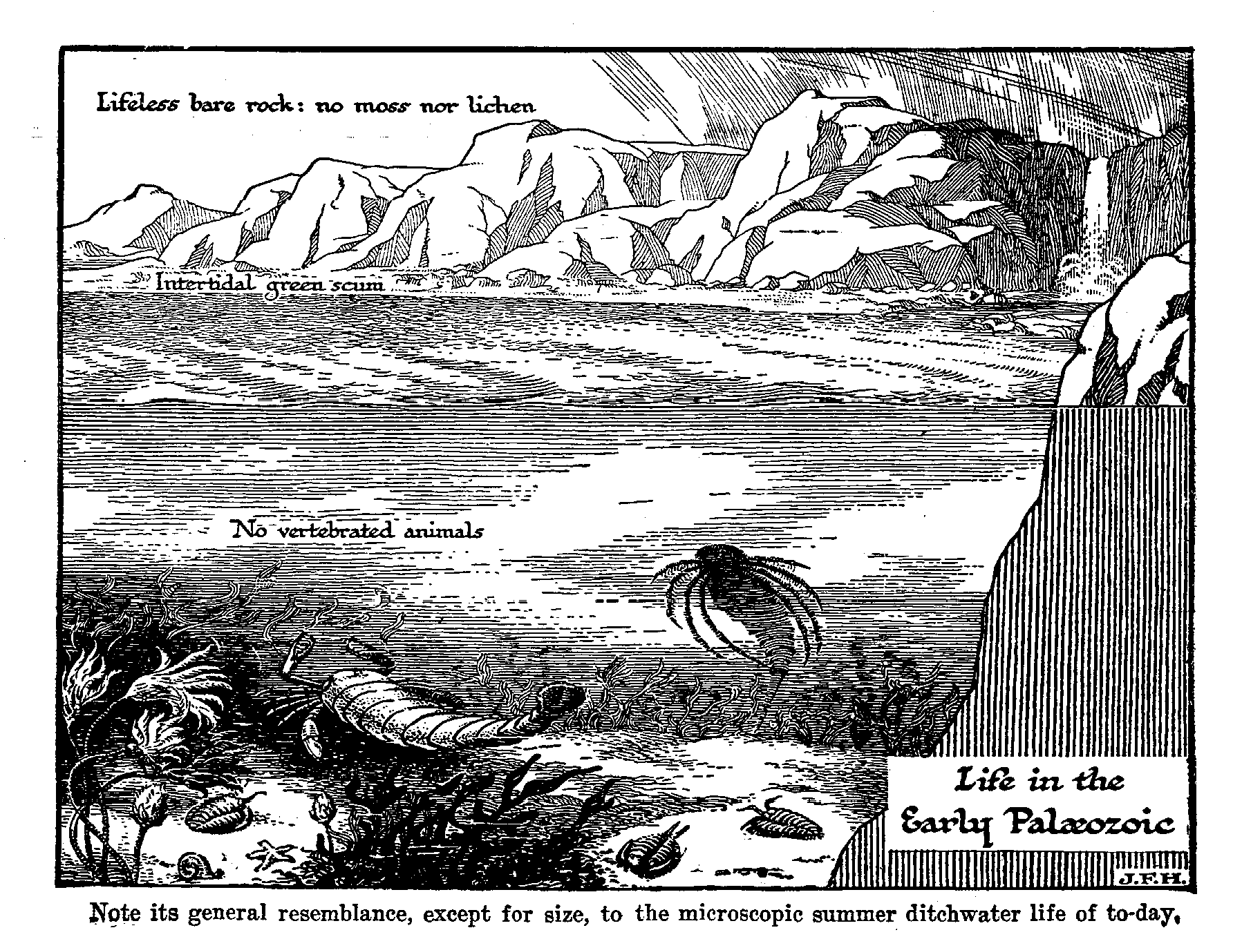 Figure 9: Life in the Early Paleozoic